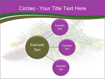 Fir branch with cone PowerPoint Template - Slide 79