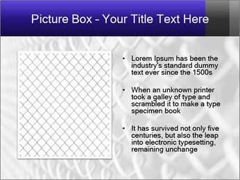 Wire fence PowerPoint Template - Slide 13