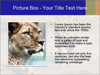 Pair of Lions walking PowerPoint Template - Slide 13