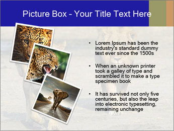 Pair of Lions walking PowerPoint Template - Slide 17