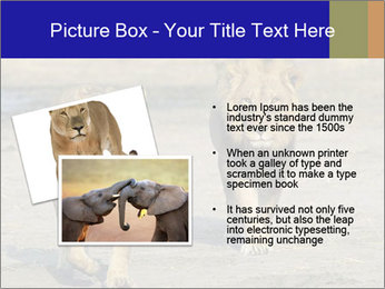 Pair of Lions walking PowerPoint Template - Slide 20