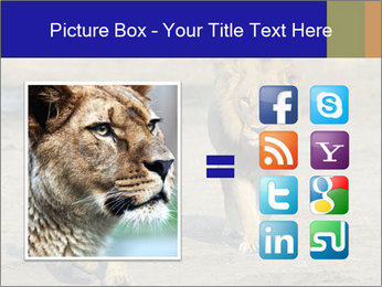 Pair of Lions walking PowerPoint Template - Slide 21