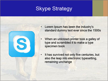 Pair of Lions walking PowerPoint Template - Slide 8