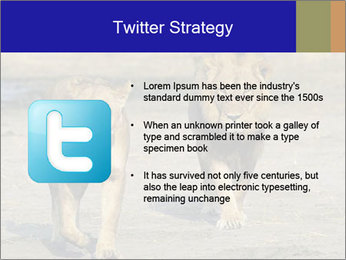 Pair of Lions walking PowerPoint Template - Slide 9