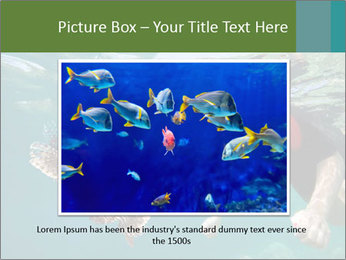 Young woman snorkeling PowerPoint Template - Slide 15