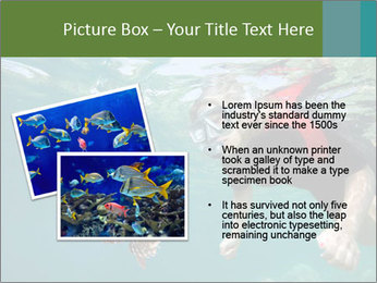 Young woman snorkeling PowerPoint Template - Slide 20
