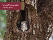 Little Owl PowerPoint Templates
