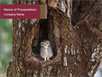 Little Owl PowerPoint Template - Slide 1