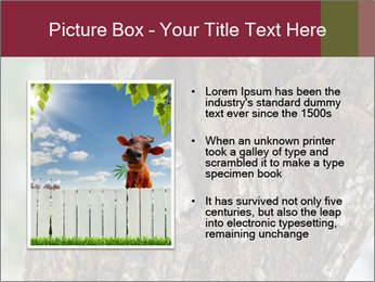 Little Owl PowerPoint Template - Slide 13