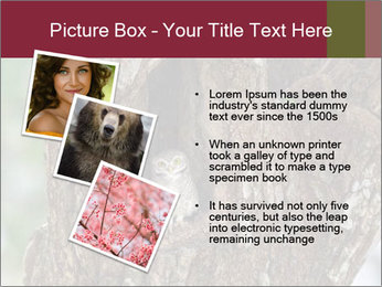 Little Owl PowerPoint Templates - Slide 17