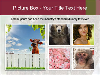 Little Owl PowerPoint Templates - Slide 19