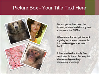 Little Owl PowerPoint Template - Slide 23