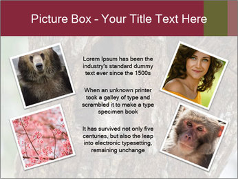 Little Owl PowerPoint Template - Slide 24
