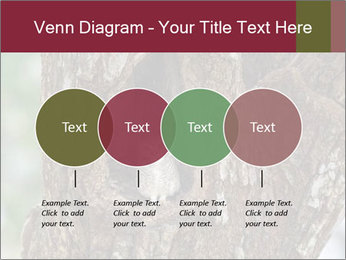 Little Owl PowerPoint Templates - Slide 32