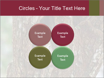 Little Owl PowerPoint Templates - Slide 38