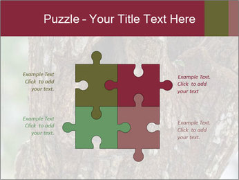 Little Owl PowerPoint Templates - Slide 43
