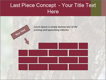 Little Owl PowerPoint Template - Slide 46