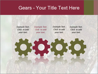Little Owl PowerPoint Templates - Slide 48