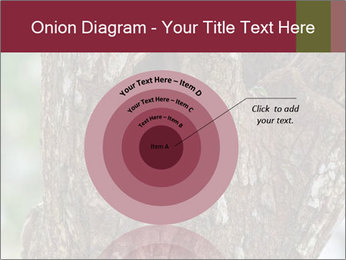 Little Owl PowerPoint Templates - Slide 61