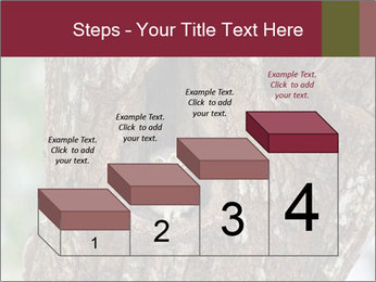 Little Owl PowerPoint Templates - Slide 64