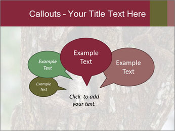 Little Owl PowerPoint Templates - Slide 73