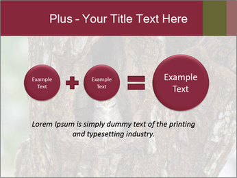 Little Owl PowerPoint Templates - Slide 75