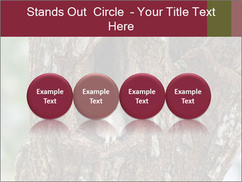 Little Owl PowerPoint Templates - Slide 76
