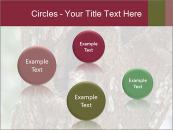 Little Owl PowerPoint Templates - Slide 77