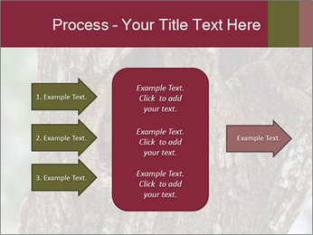 Little Owl PowerPoint Templates - Slide 85