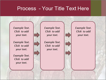 Little Owl PowerPoint Templates - Slide 86