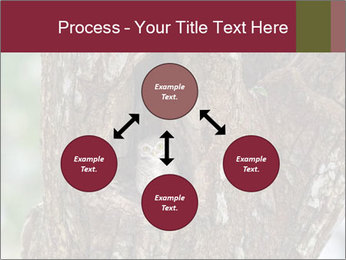 Little Owl PowerPoint Templates - Slide 91