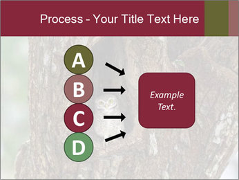 Little Owl PowerPoint Templates - Slide 94