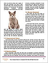 0000090576 Word Template - Page 4