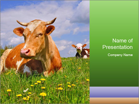 Cow on a summer PowerPoint Templates