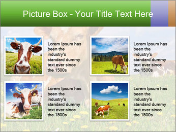 Cow on a summer PowerPoint Templates - Slide 14