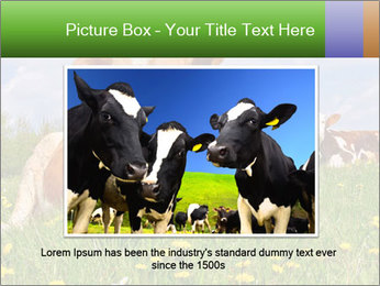 Cow on a summer PowerPoint Templates - Slide 15