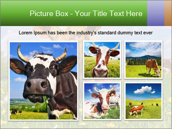 Cow on a summer PowerPoint Templates - Slide 19