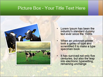 Cow on a summer PowerPoint Templates - Slide 20