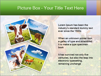 Cow on a summer PowerPoint Templates - Slide 23