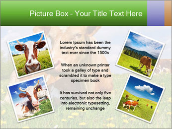 Cow on a summer PowerPoint Templates - Slide 24