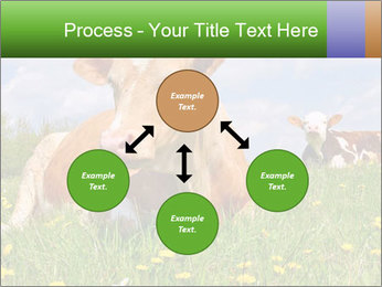 Cow on a summer PowerPoint Templates - Slide 91
