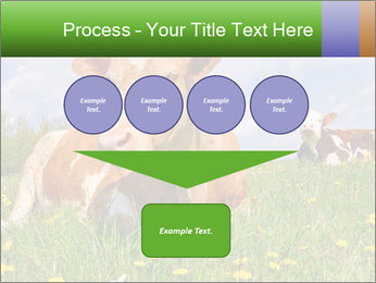 Cow on a summer PowerPoint Templates - Slide 93