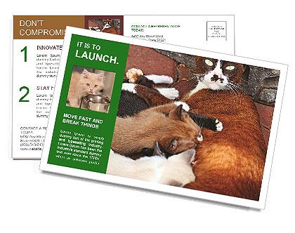 0000090586 Postcard Template