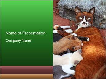 Cat PowerPoint Templates - Slide 1