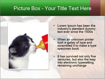 Cat PowerPoint Template - Slide 13