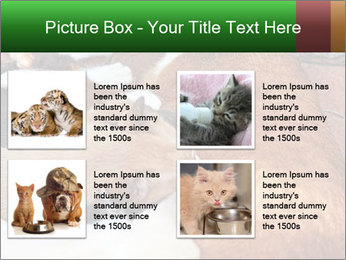 Cat PowerPoint Template - Slide 14