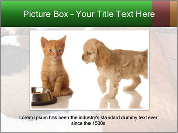 Cat PowerPoint Template - Slide 15