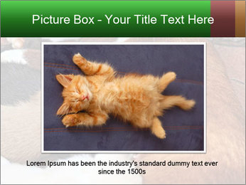 Cat PowerPoint Template - Slide 16