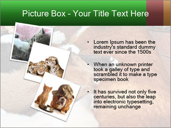 Cat PowerPoint Template - Slide 17