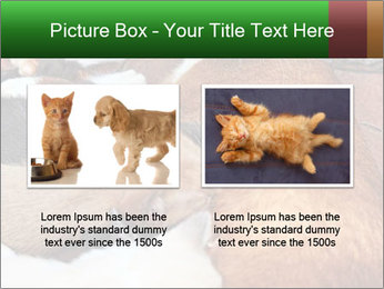Cat PowerPoint Template - Slide 18